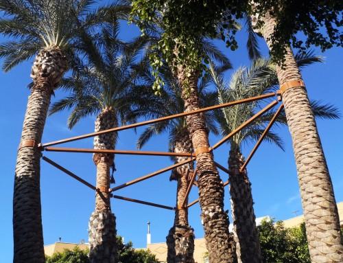 Arriostramiento de palmeras
